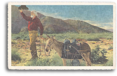This vintage postcard features a old prospector with his beloved friend and fellow-worker, the Burro (or donkey). The Burro made a good pack animal and could survive nicely in the dry, hot climate of the desert Southwest.