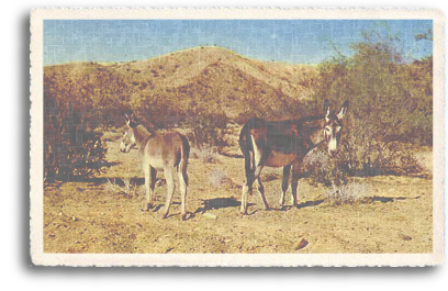 Download Fotos d mujeres cojiendo con burros: burros for sale in