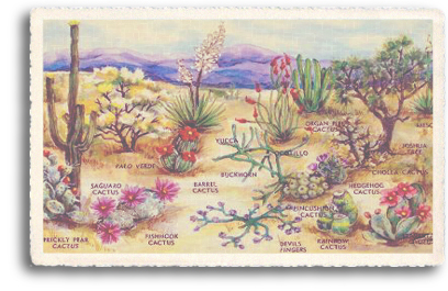 This vintage postcard illustrates the colorful variety of cacti (cactus) that abound in Northern New Mexico and the entire Southwest. The cacti are quite fascinating plants that grow in all shapes and sizes, with flower blossoms of many kinds and colors.