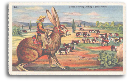 A vintage postcard from the 1940s illustrates the fascination of the American public with the idea of the Giant Jack Rabbit. Dozens of these types of cards were published during this time and well into the 1960s. Here, a cowboy rides a Giant Jack Rabbit (or the mythological Jackalope) in order to heard cattle in the high desert of New Mexico.