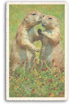 Two Prairie Dogs share some affection in their Prairie Dog Village just outside Taos, New Mexico.